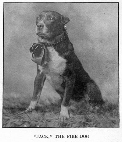 Image of Jack, the Fire Dog